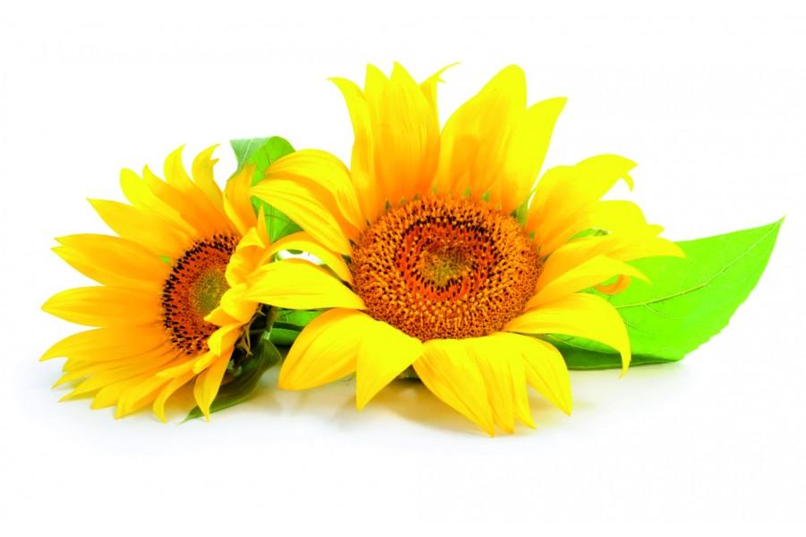 Seminte de floarea soarelui negre  pentru copt